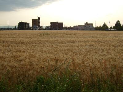 スタバ 小麦